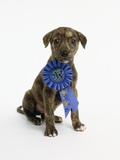 Pit Bull Puppy with 1st Place Ribbon