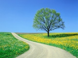 Country road and tree  spring