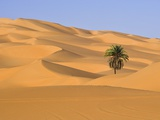Palm Tree in Desert
