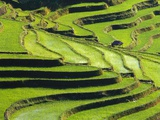 Terraced rice fields in Yunnan Province  China
