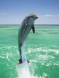 Jumping Bottlenose Dolphin