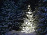 Illuminated Christmas Tree in Snow Papier Photo par Larry Williams