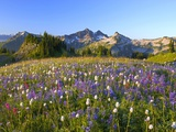 Wildflowers and Tatoosh Range