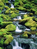 USA  Washington  Olympic National Park  creek with moss and rocks