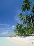Beach with palms and clear sea  Malaysia  Mabul Island