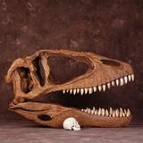 Carcharodontosaurus Skull with Human Skull
