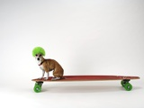 Chihuahua on a Skateboard