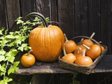 Pumpkins arranged next to a weathered fence