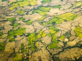 Green Agricultural Fields in Chile