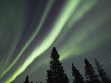 Northern Lights over Boreal Forest