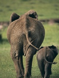 Adult Elephant and Baby