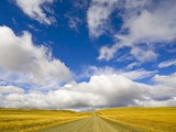 Cumulus Clouds above Rural Road
