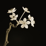 Twig of Tiny Blossoms from Hawthorn Tree