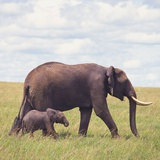 African Elephant Calf with Mother in Savanna