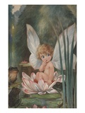 Illustration of Fairy on Water Lily by Fred Spurgin