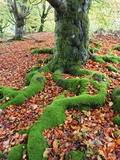 Moss Covered Roots Surrounded by Leaves