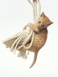 Orange Kitten Hanging from Tassel