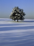 Tree in snow covered landscape
