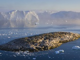 Small Rocky Island and Icebergs