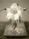Elegant Flower in Small Vase