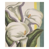 Illustration of Calla Lilies