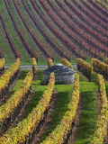 Vineyards in Fall in the Hautes-Cotes of Burgundy