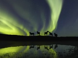 Horses under the Aurora Borealis