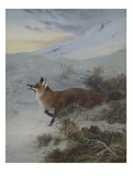 A Fox in a Winter Landscape