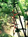 Heliconia Growing Among Tropical Ferns