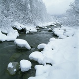 Snowy Riverbank
