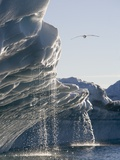 Melting Icebergs in Disko Bay  Greenland