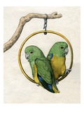 Illustration of Two Lovebirds