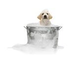 Puppy Taking Bath Papier Photo par Lew Robertson