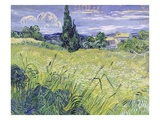 Landscape with Green Corn