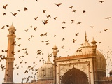 Flock of Birds Flying Around Jama Masjid Mosque