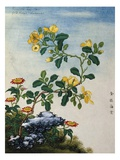18th-Century Chinese Watercolor of Gold Thread Plant Giclée