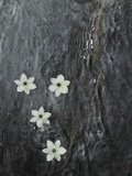Four flowers floating on water
