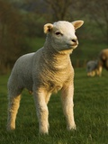 Beltex Crossbred Lamb in Green Pasture