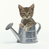 Kitten Sitting in a Watering Can