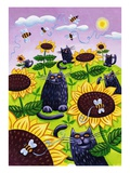 Black Cats Watching Honeybees on Sunflowers