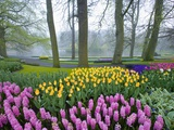 Spring Flowers in Flower Garden