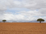 Barren Landscape with Trees