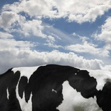 Cow and Sky Patterns