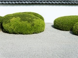 Japanese zen garden