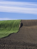 Wheat Field and Plowed Land