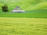 Old Barn in Green Agricultural Fields