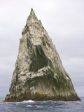 Imperial Shags Nesting on Rocky Pyramid of Shag Rocks