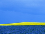 Flax and Canola Fields Under Stormy Sky