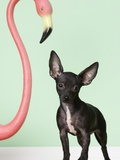 Chihuahua next to pink flamingo