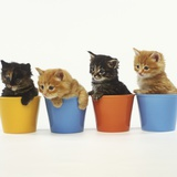 Four Kittens in Plastic Cups